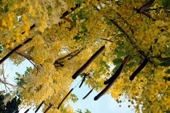 Douche dorée et urophilie : fantasmes et expériences