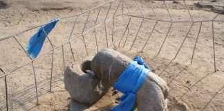 Pénis et monuments: tour du monde des lieux phalliques