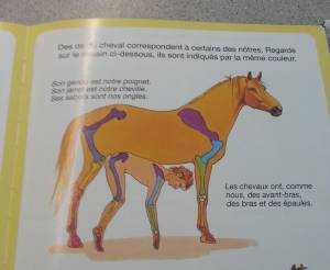 os-cheval