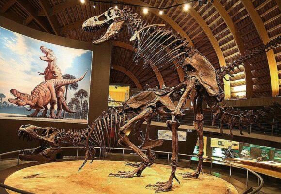 La vie sexuelle des dinosaures