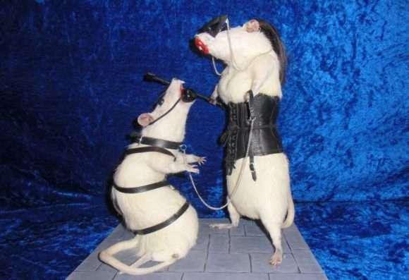 rats empaillés bdsm