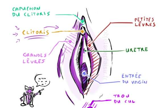 Comment faire un cunni ? Anatomie de la vulve