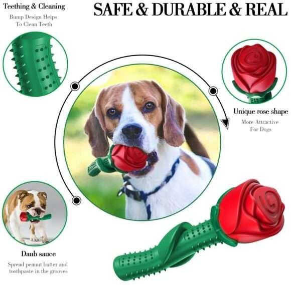 rose à mâcher pour chien