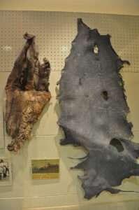 Musée des pénis islandais